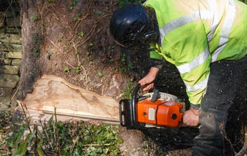 Tree Removal In Waltham Forest Compare Quotes Free Advice